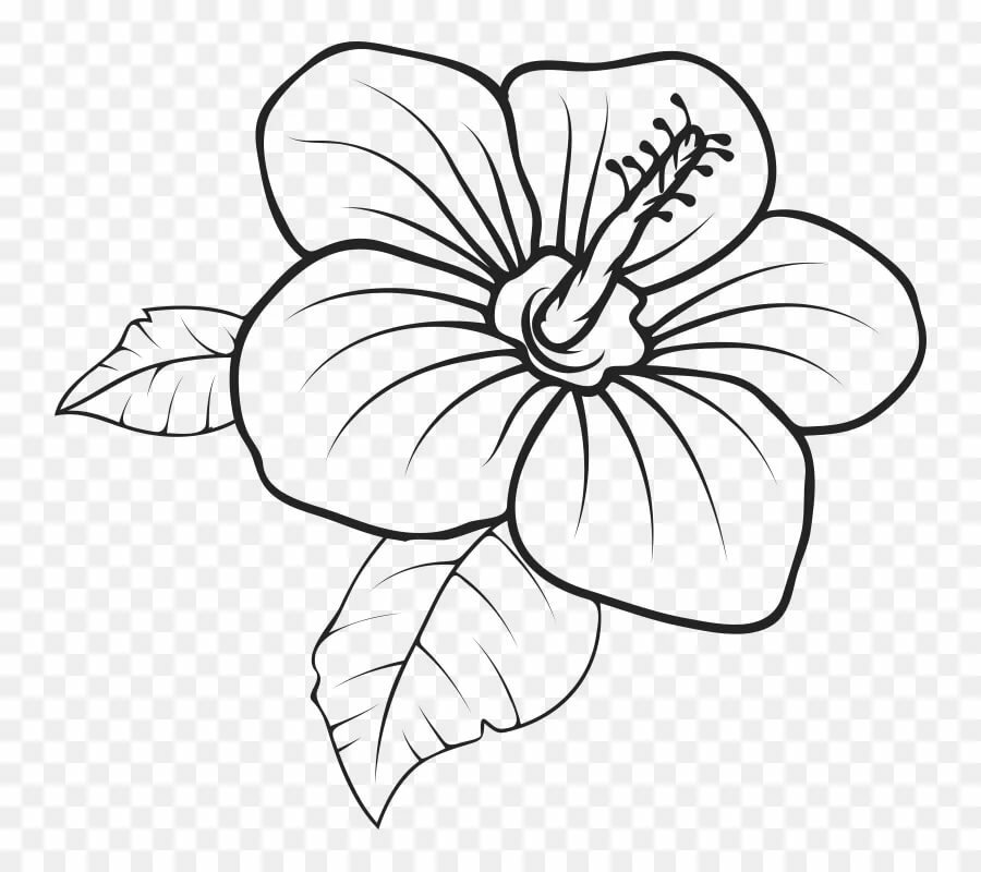 Цветы в картинках легкие