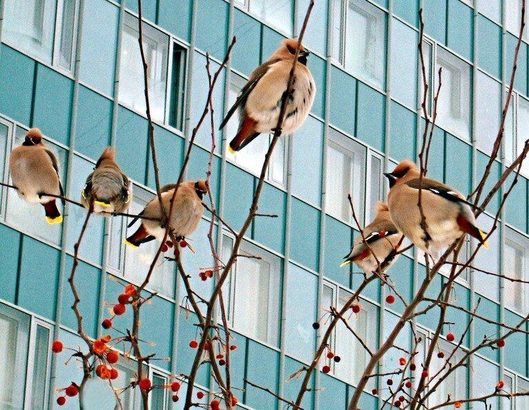 Все птицы приморского края фото и название поделитесь темой