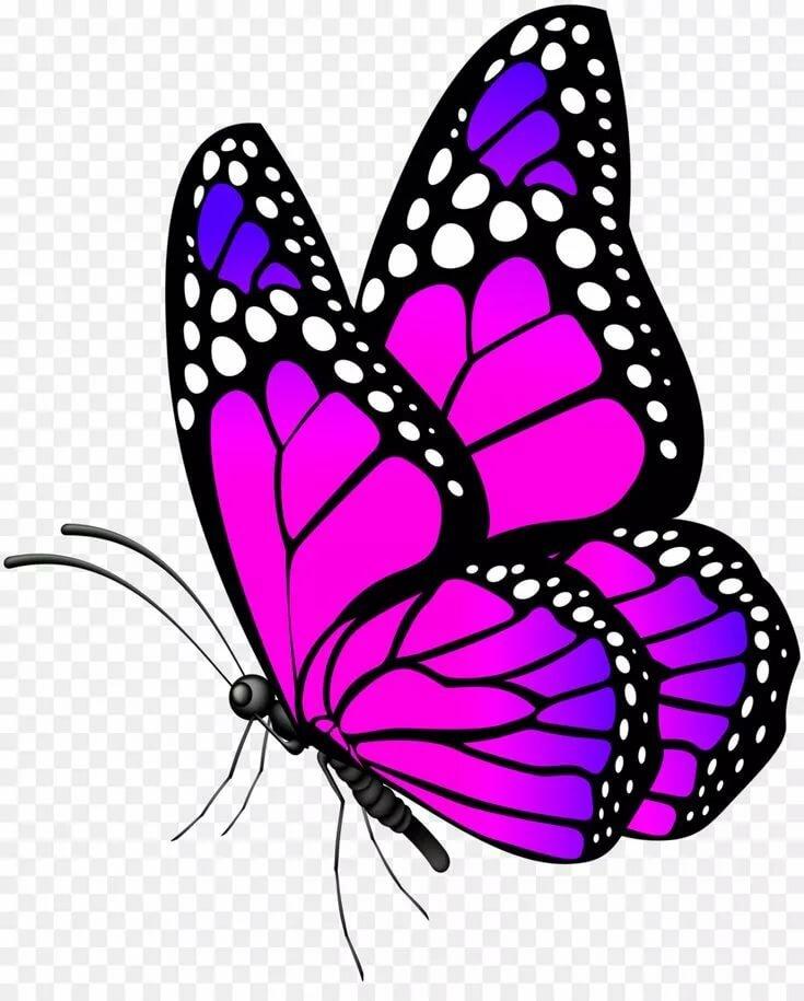 Бабочки картинки красивые нарисованные