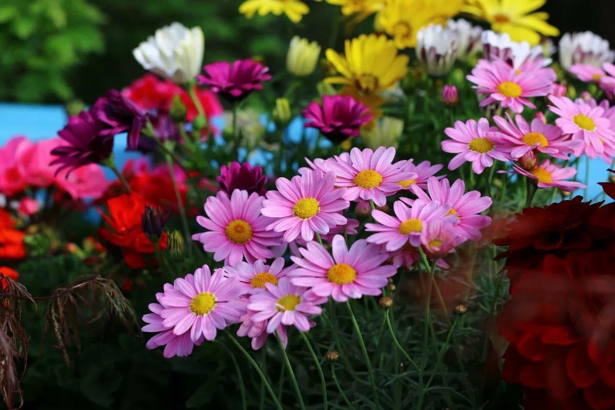 картинки с июльскими цветами рекомендуем выбрать все