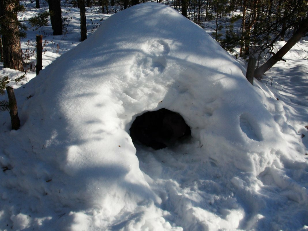 картинка мишка спит в берлоге зимой праздничной