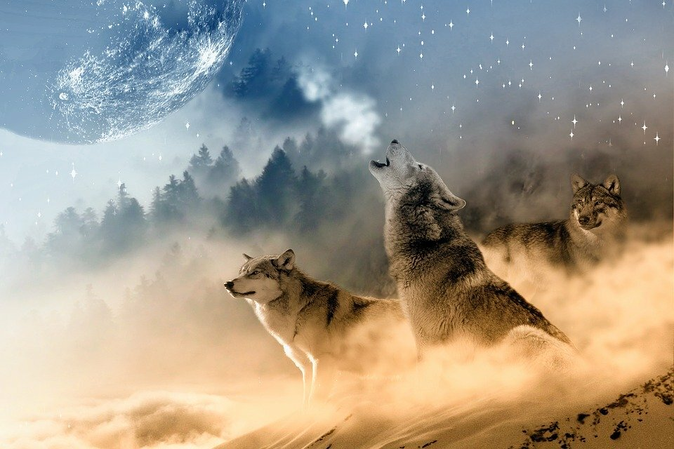 фото волка на фоне города для