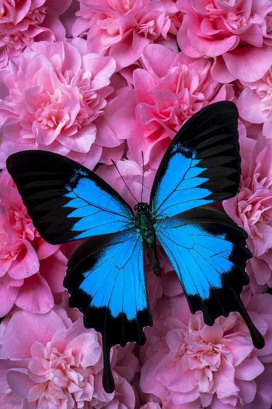 Красивые картинки на аву с цветами вертикально