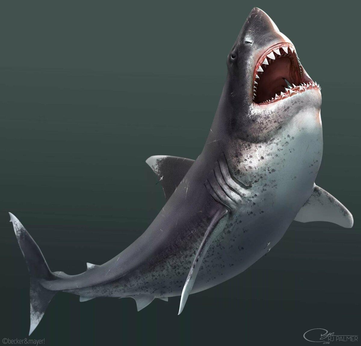 картинка акула бесите женщины