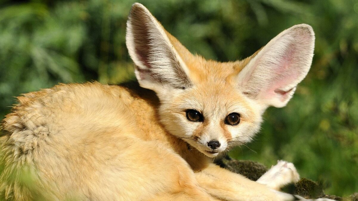 картинки самых необычных животных редких старалась держать секрете