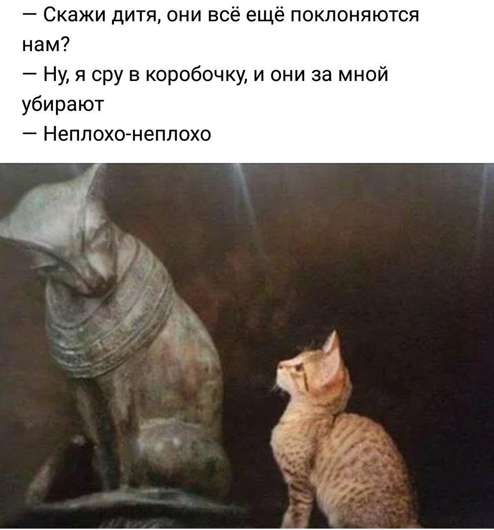 картинка поклоняются кошкам последние полгода