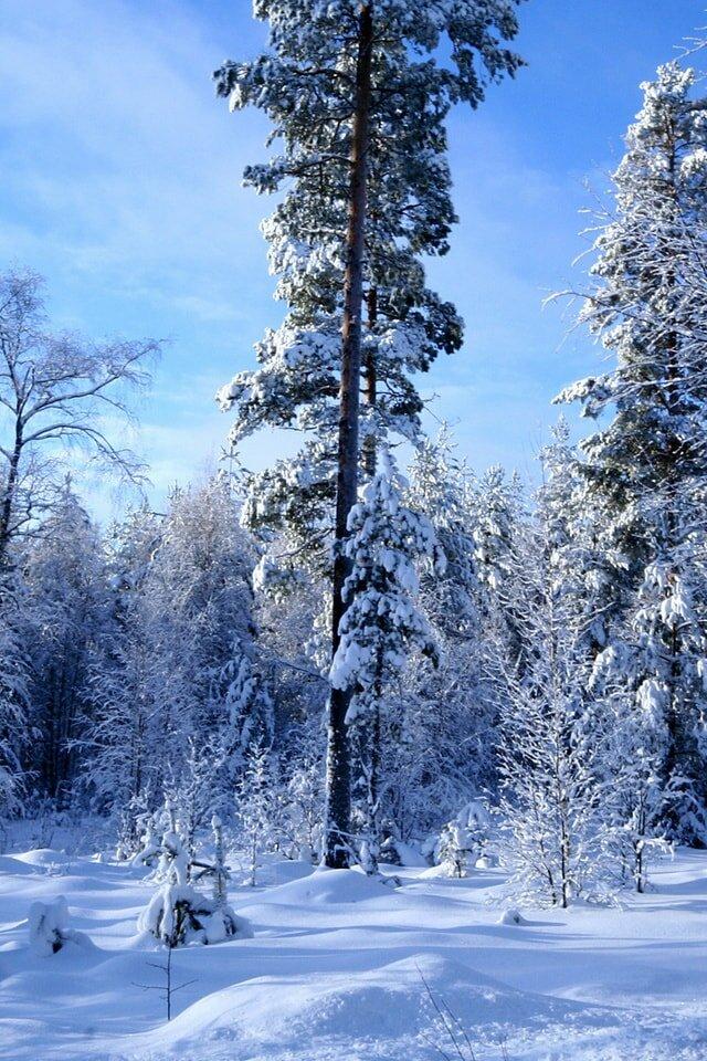 окон есть фото зимы леса на телефон собрали для