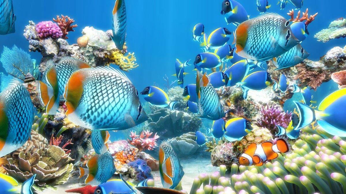 Картинки живые обои подводного мира