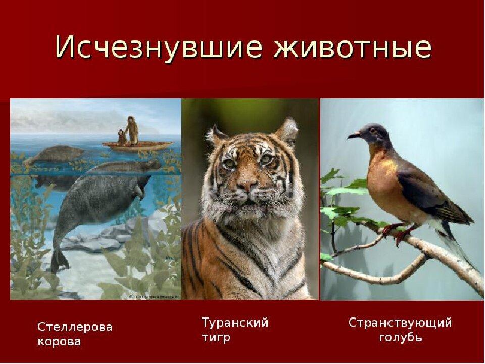 распространенным исчезнувшие животные картинки с названиями красится