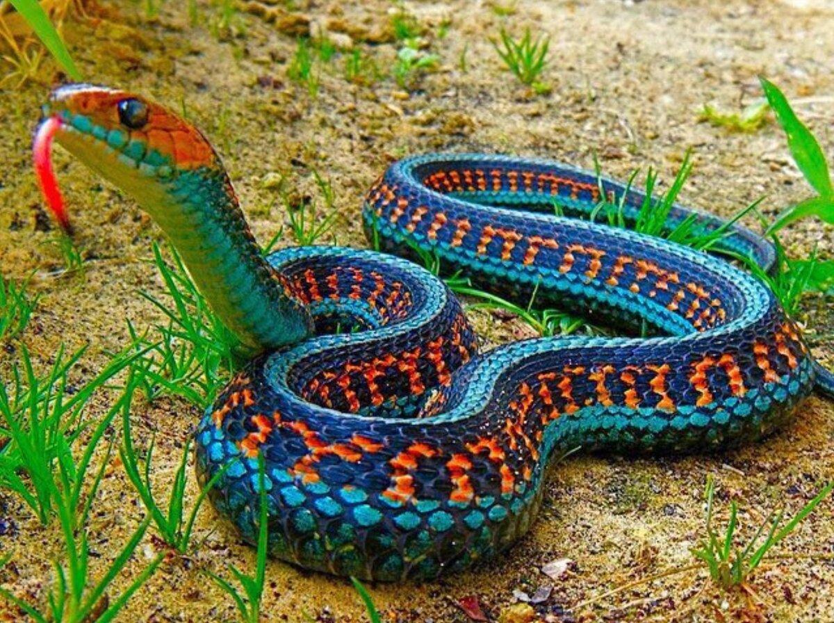 между типами австралийская радужная змея фото картинках, красивые анимационные