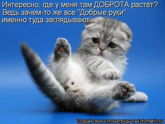 Котята картинки с надписями смешными
