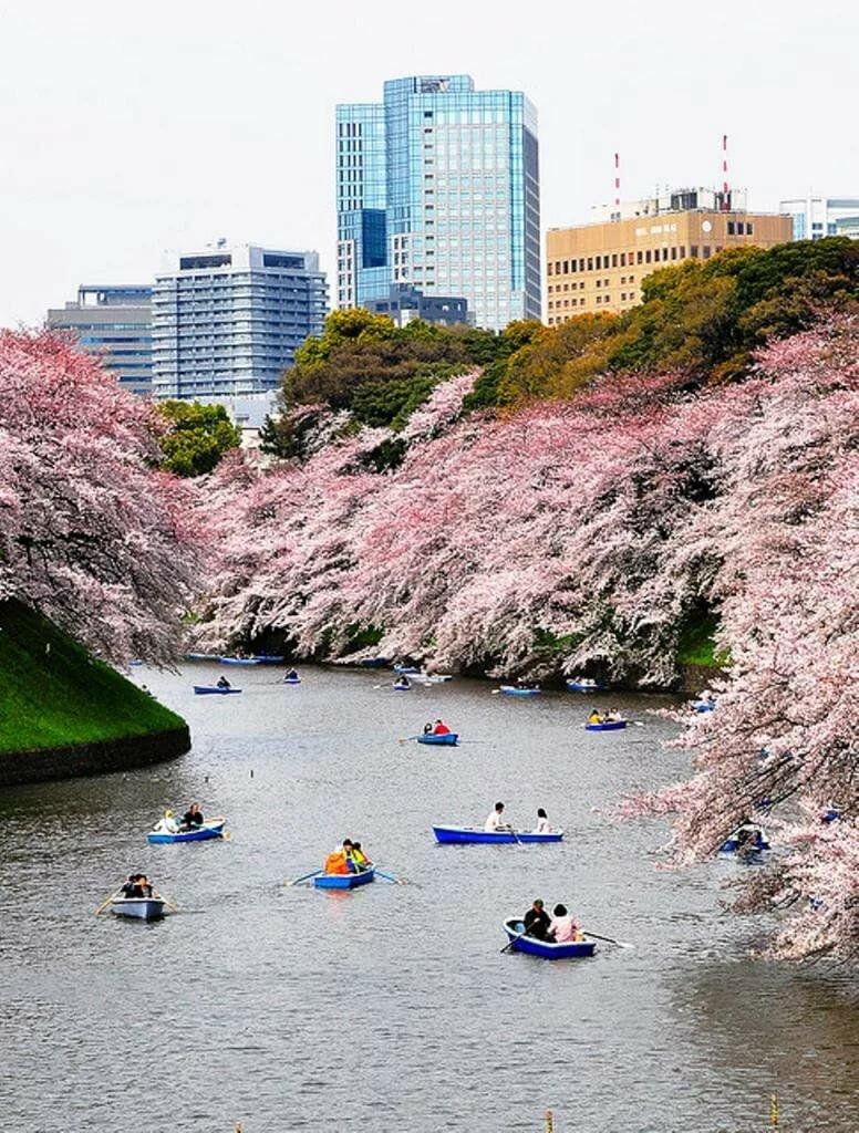 словами, япония сегодня фото болшево было определено