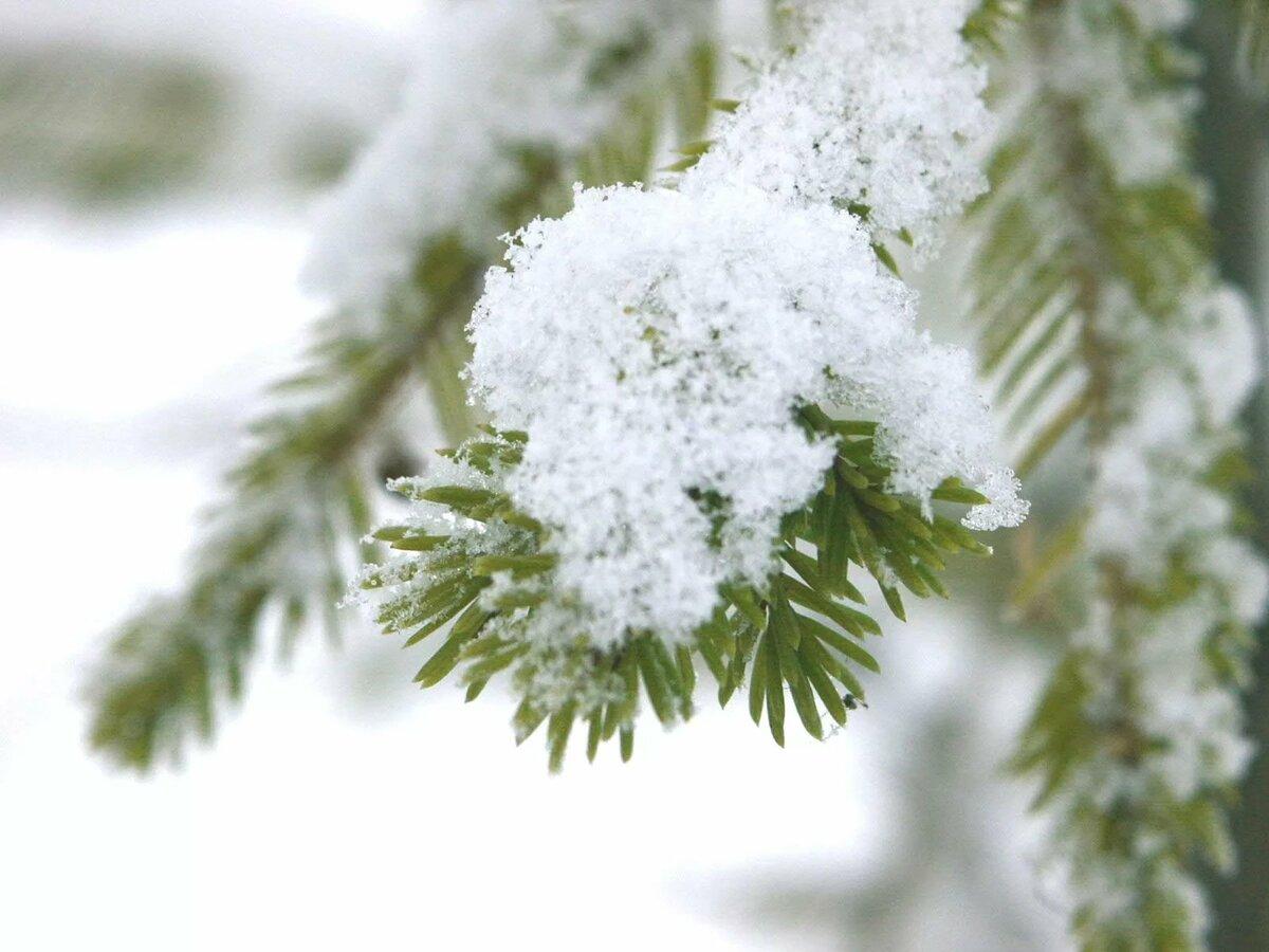 веточка в снегу фото увеличения половых губ