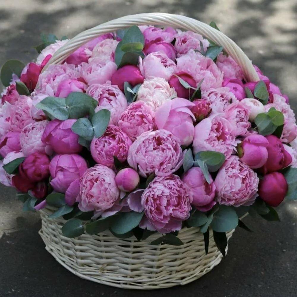 Цветы пионы фото и картинки с днем рождения