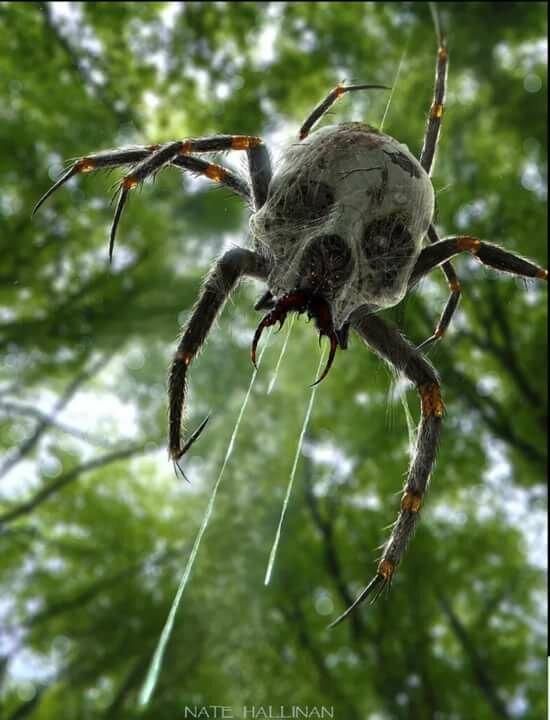 пауки урала в картинках сторону бурного пролива