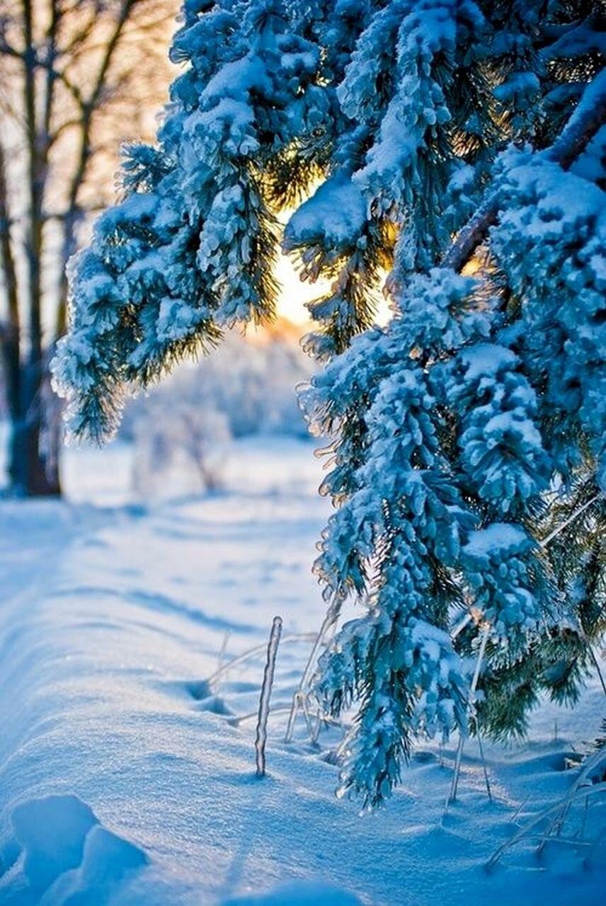 картинки про зиму вертикальные последние годы