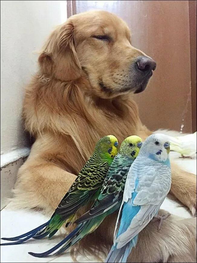 картинки с попугаем и хомячком разница