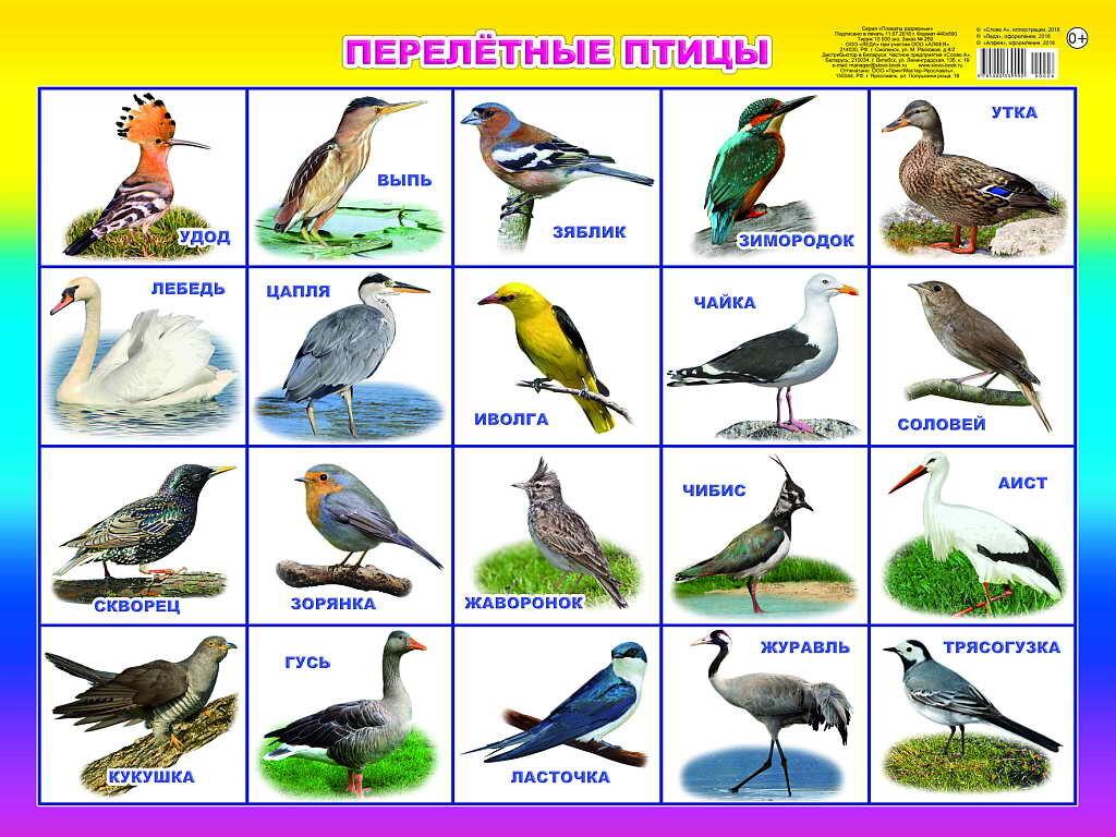 Птицы по алфавиту от а до я фото и названия