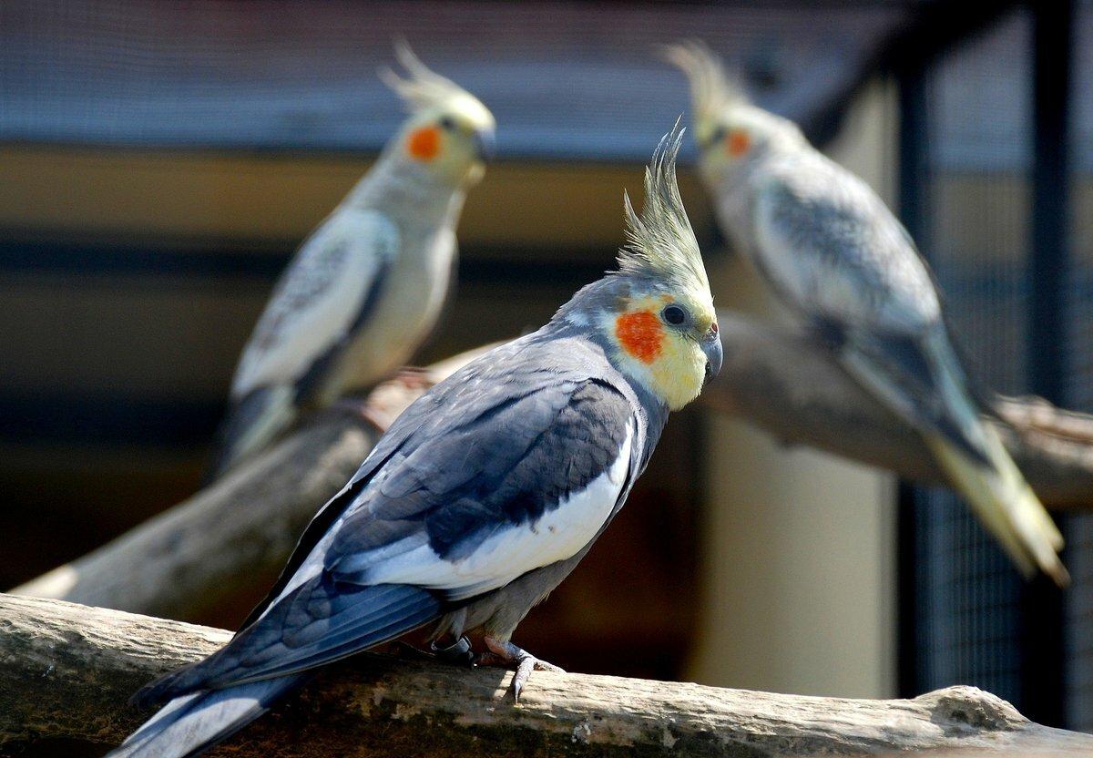Птицы из глины для начинающих свадебный шоколад