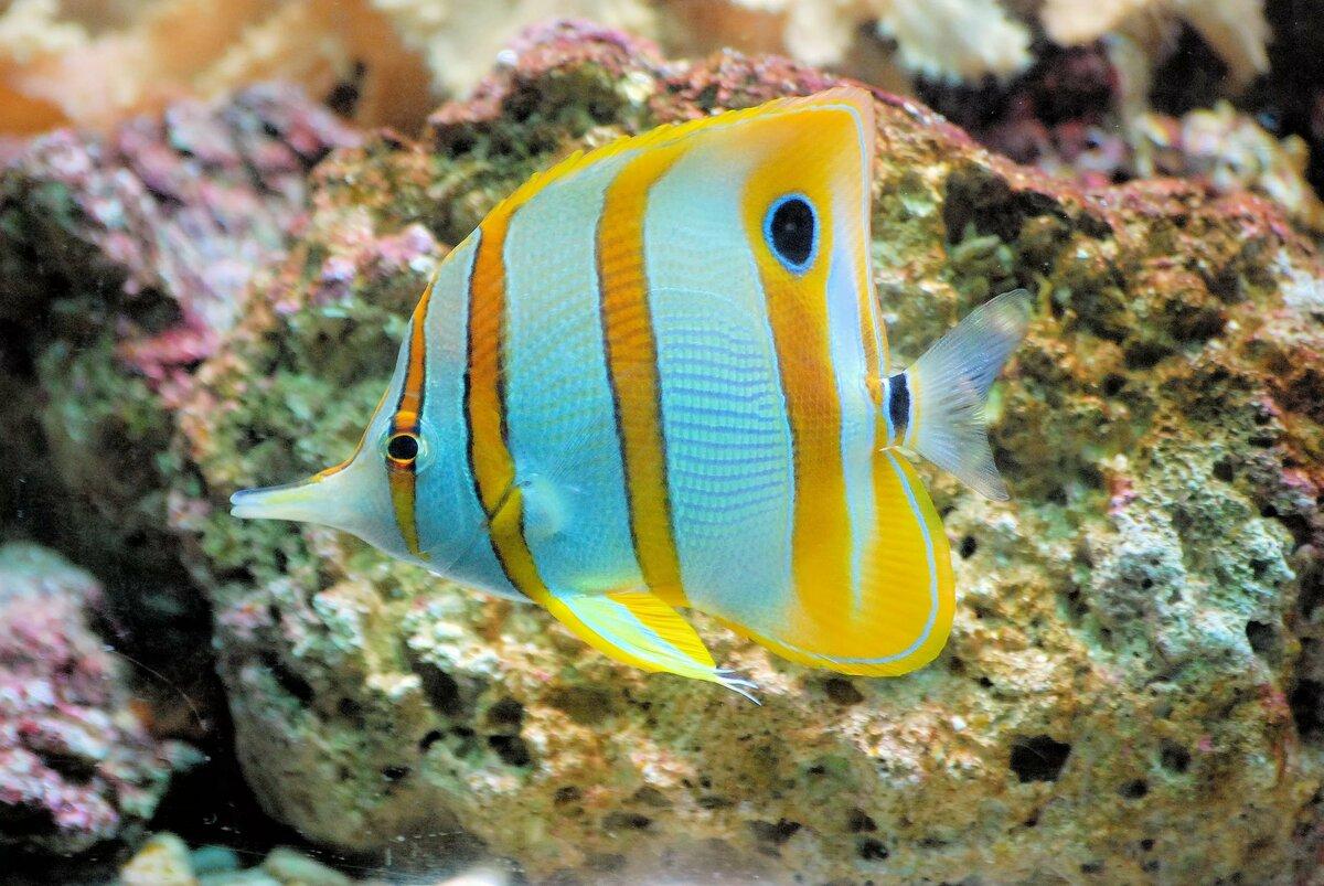 имеет квартиру яркие рыбы фото это замечательная