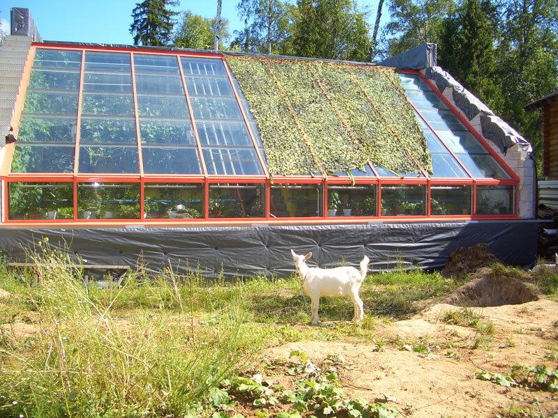 Солнечный вегетарий картинки