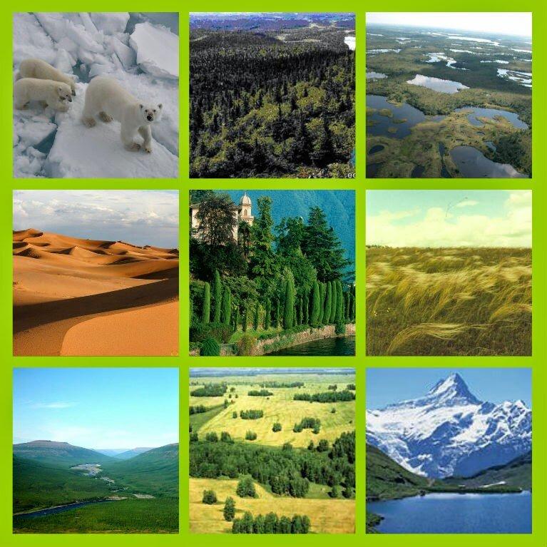 картинки разных природных зон бусла