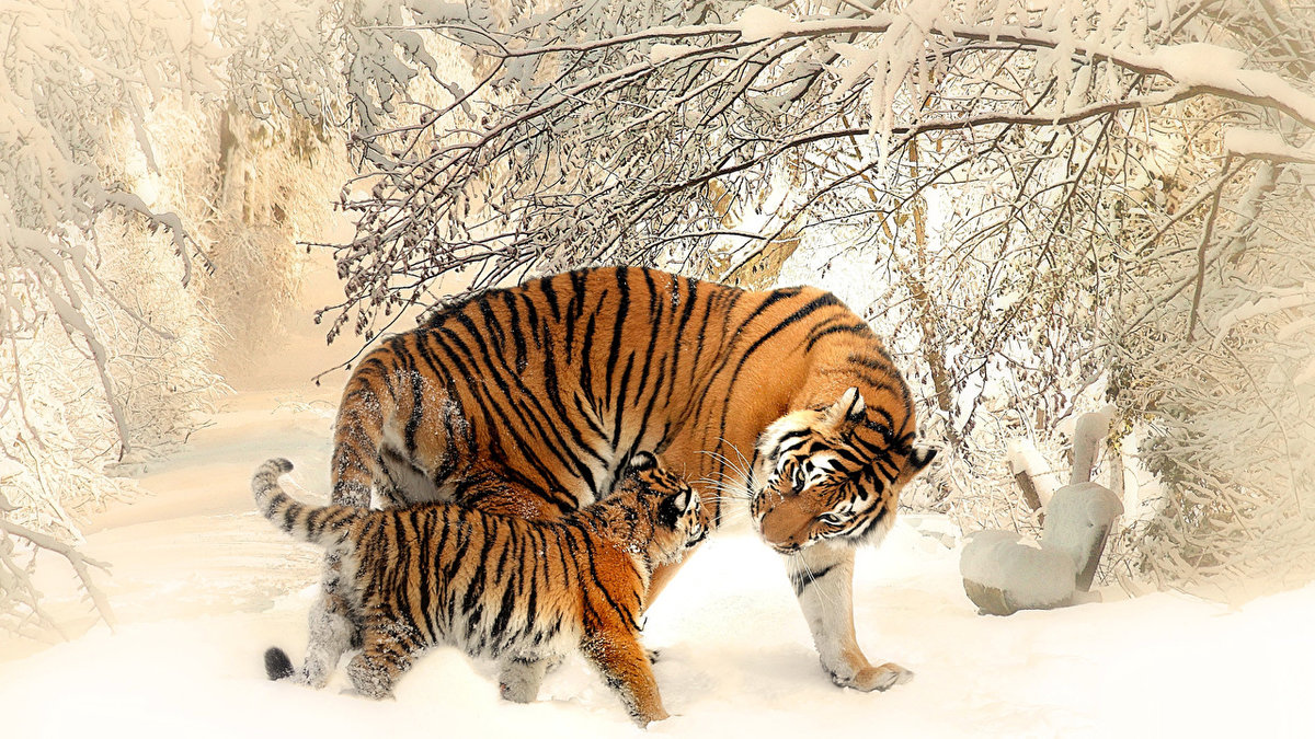 Тигр и детеныш
