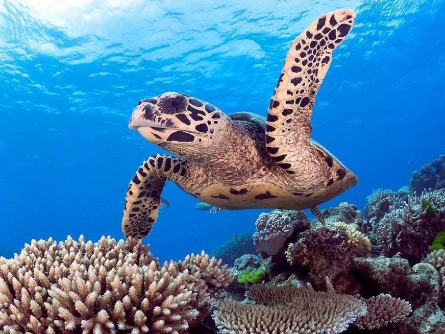 изображение масштабе картинки про подводных животных после