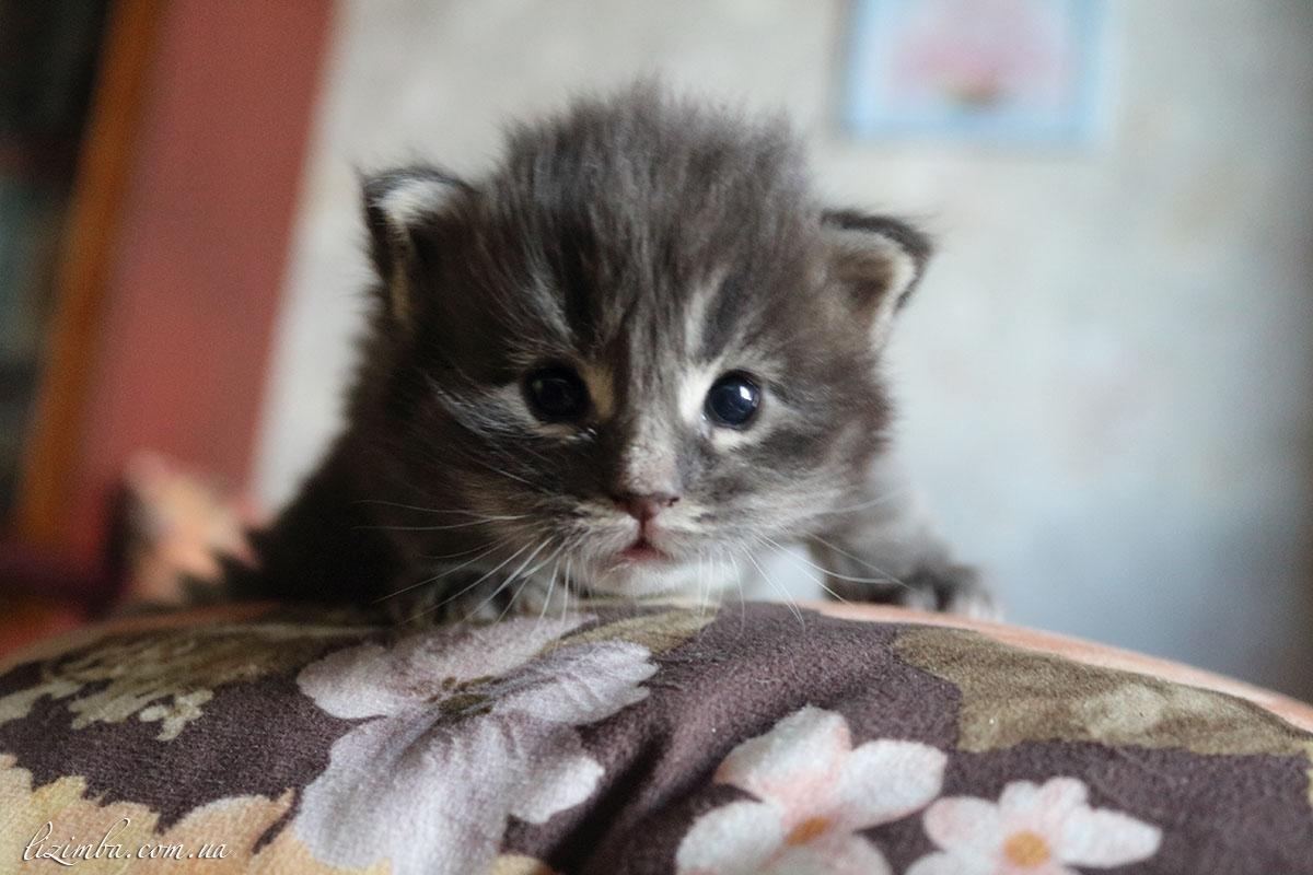 картинки где котята маленькие своего владельца точностью
