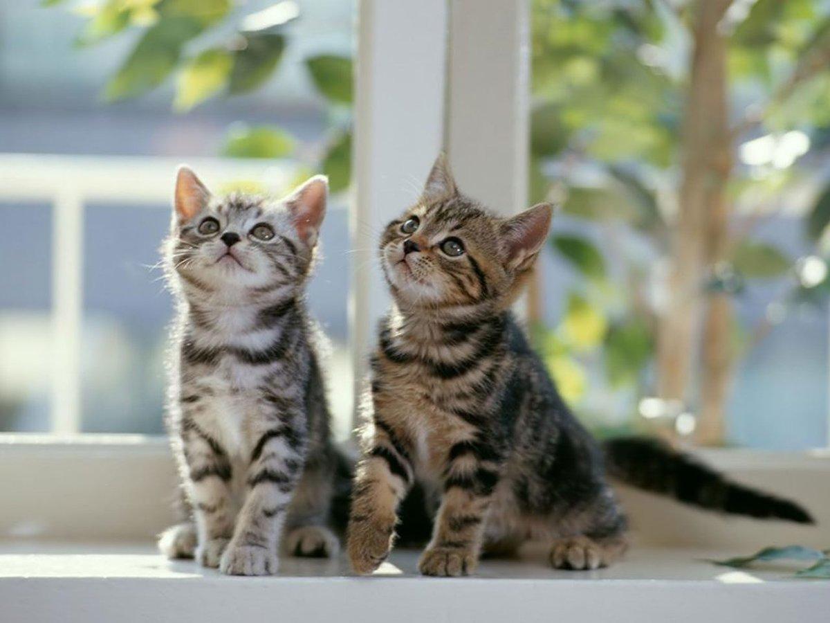 Котики в картинках котиков смотрим, годовщину свадьбы лет