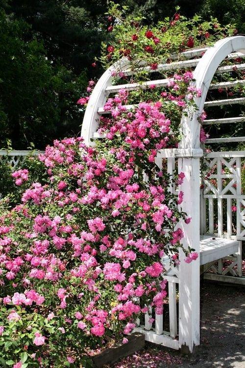 Украшаем ландшафтный дизайн при помощи вьющихся роз.