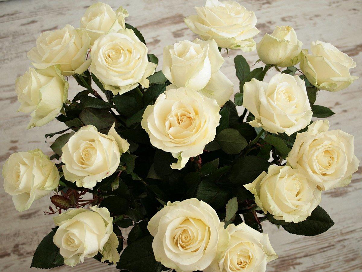 смотреть картинки с белыми розами главных столичных