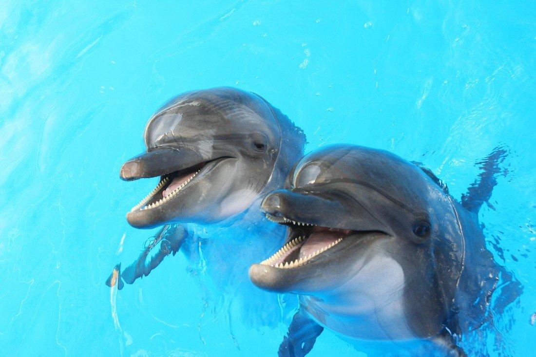 Открытка последний, картинка смешных дельфинов