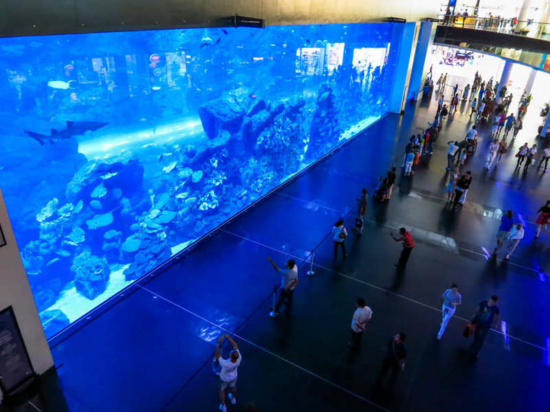Аквариум в Дубай Молле. Цены на билеты, фото и видео.