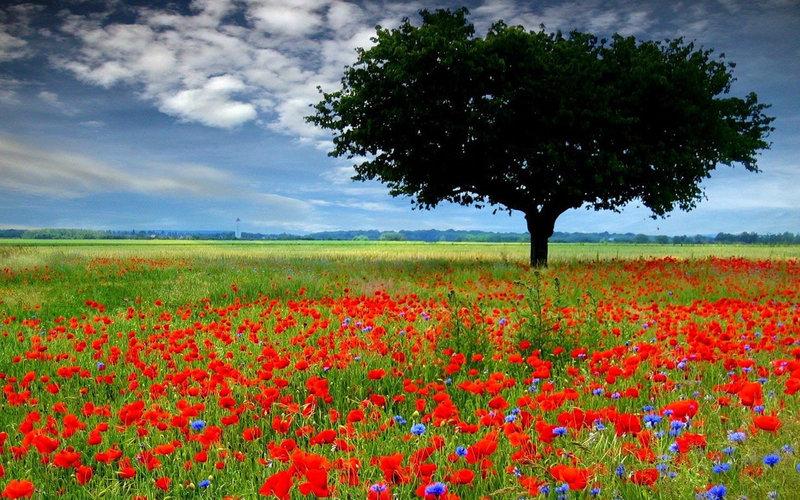 """Челлендж-блог """"Сова-Искусница"""": Фото-вдохновение на летнюю тему"""