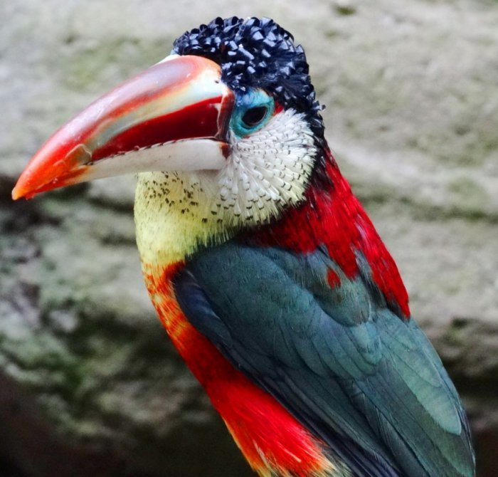 Экзотические птицы невиданной красы (11 фото)