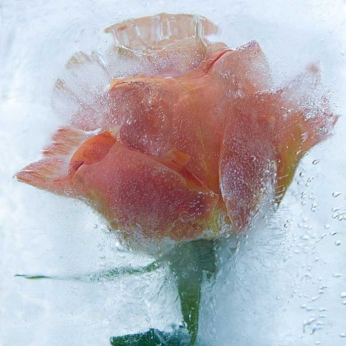 Ледяные скульптуры цветов