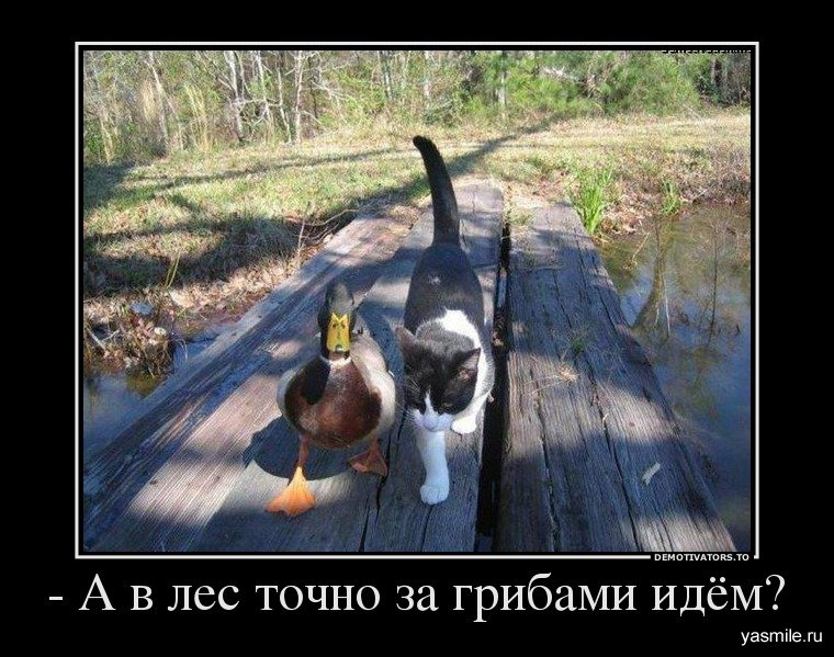 Новые демотиваторы на 7.12.2013!
