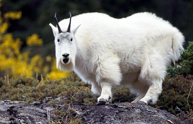Самые экзотические животные (12 фото)