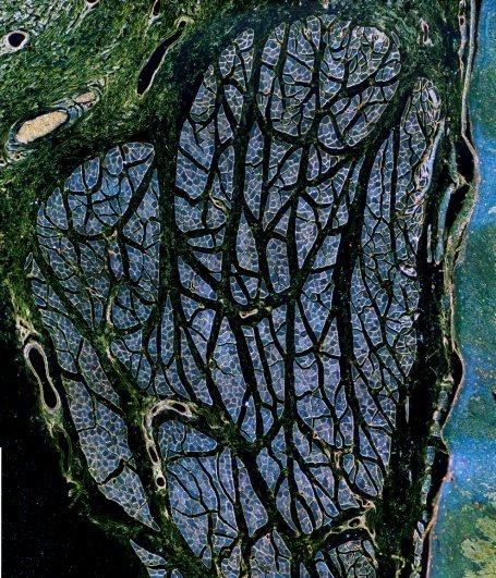 Семя растения из пресноводного пруда