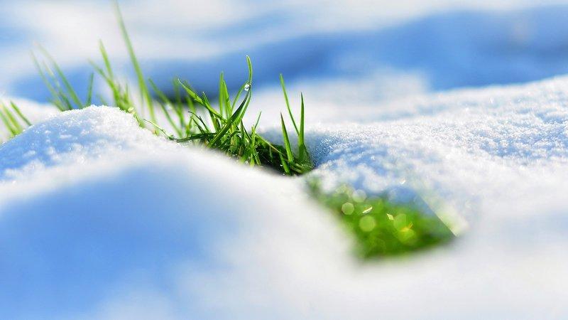 Трава пробивается из под белого снега