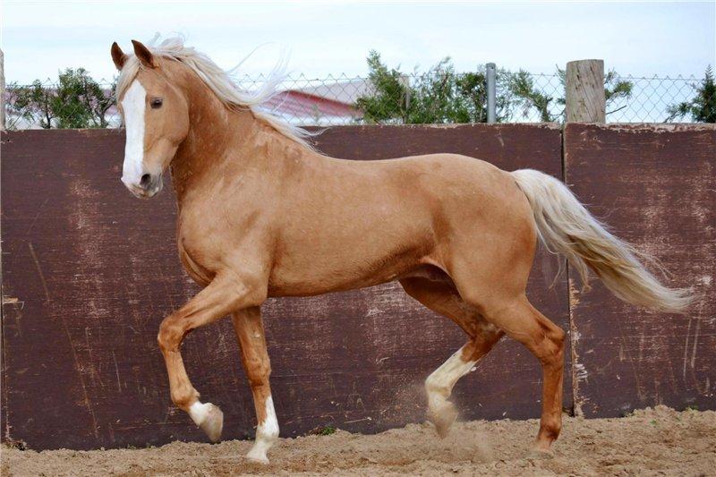 такое фото бежевых коней делаем