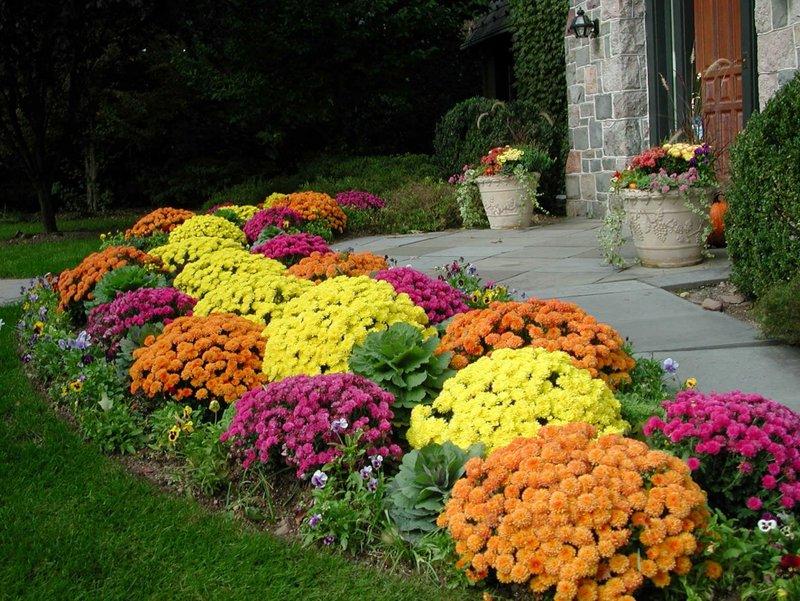 фото осенние цветы в саду