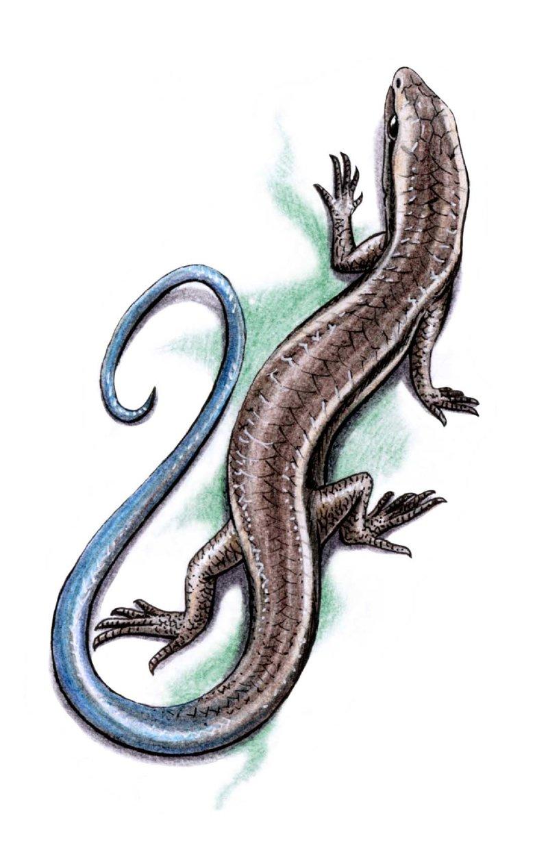 Эскиз женской татуировки ящерица — Женские татуировки