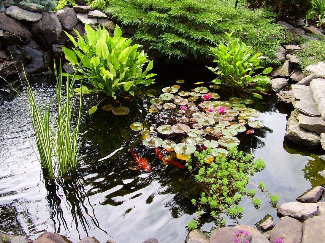 Растения для пруда купить в серпуховской район