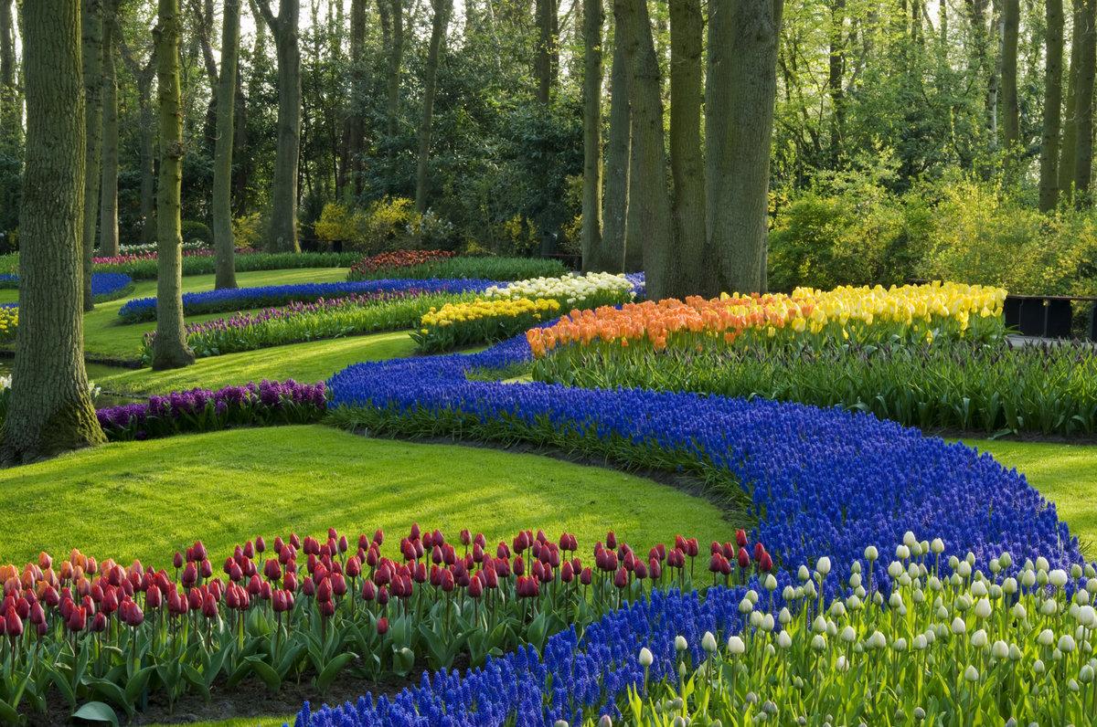 Картинки газон с цветами
