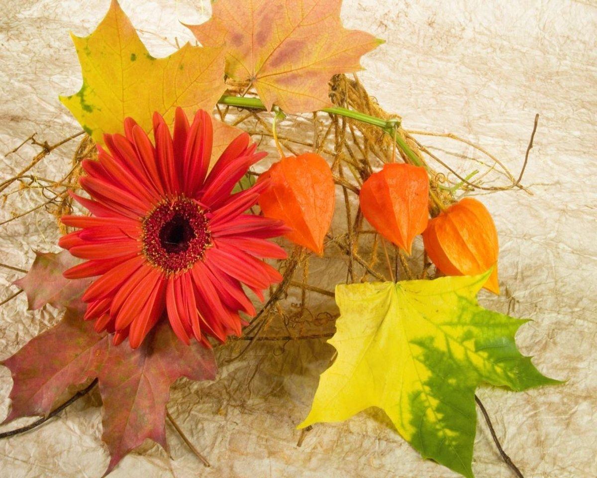 Открытки с листьями осень