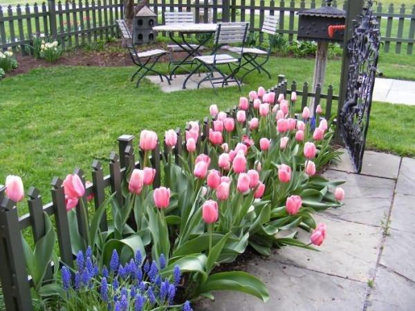 посадка тюльпанов вдоль забора узкая клумба карточка