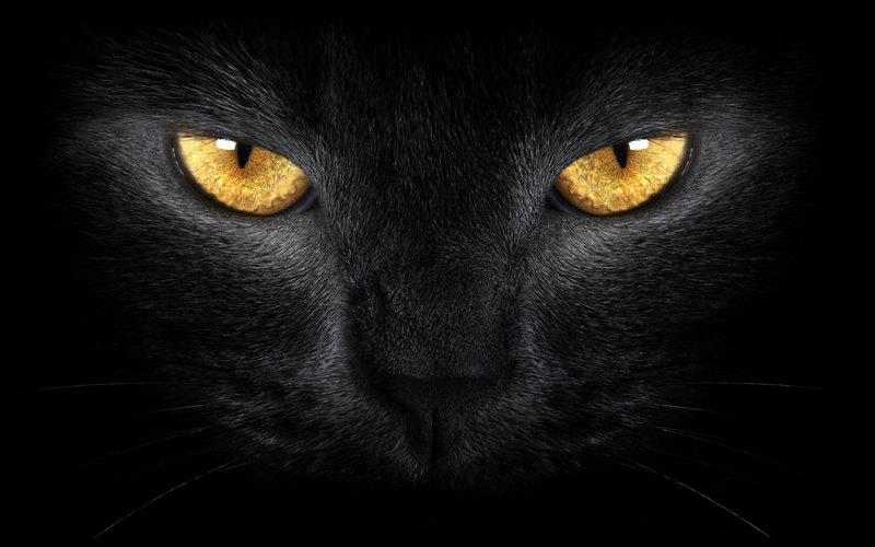 Картинка глаза черного кота