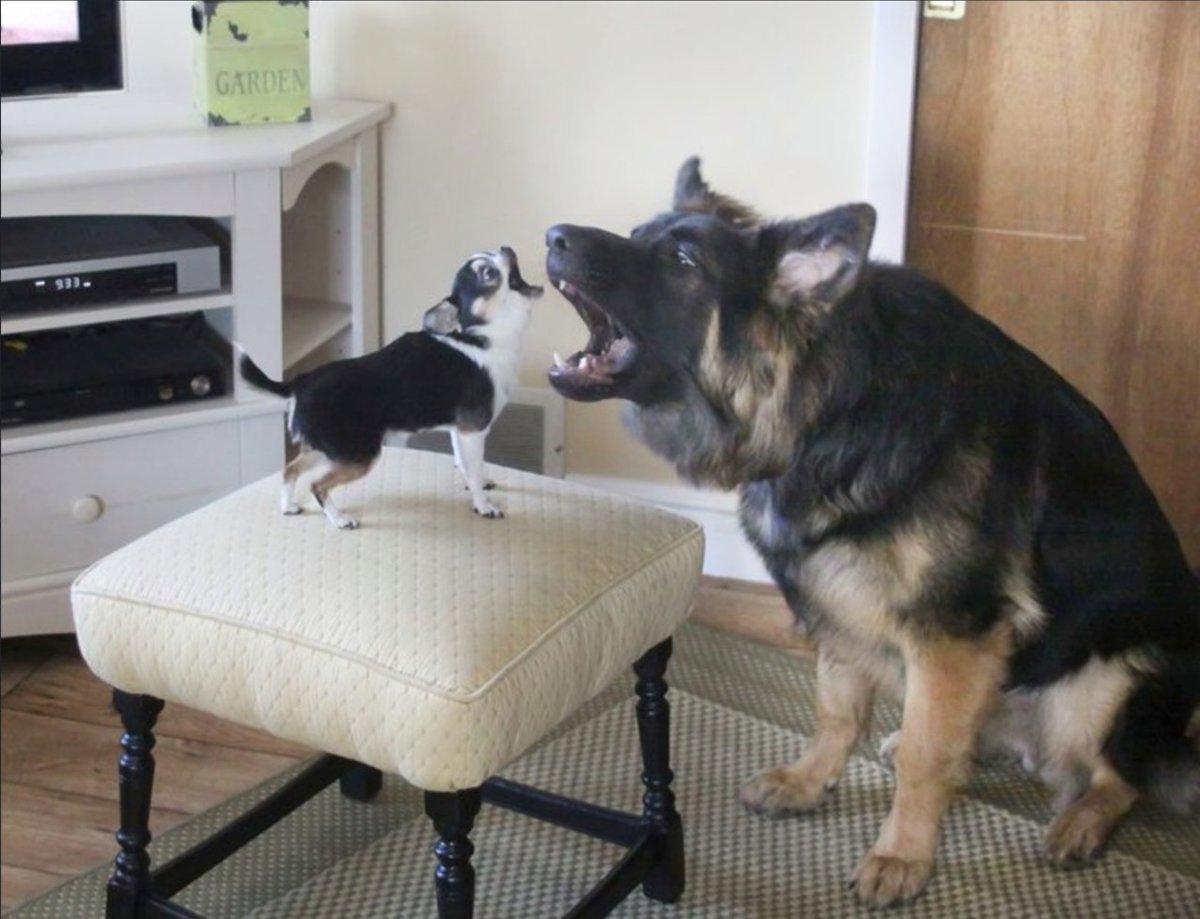 Смотреть смешные картинки до слез про собак, самых